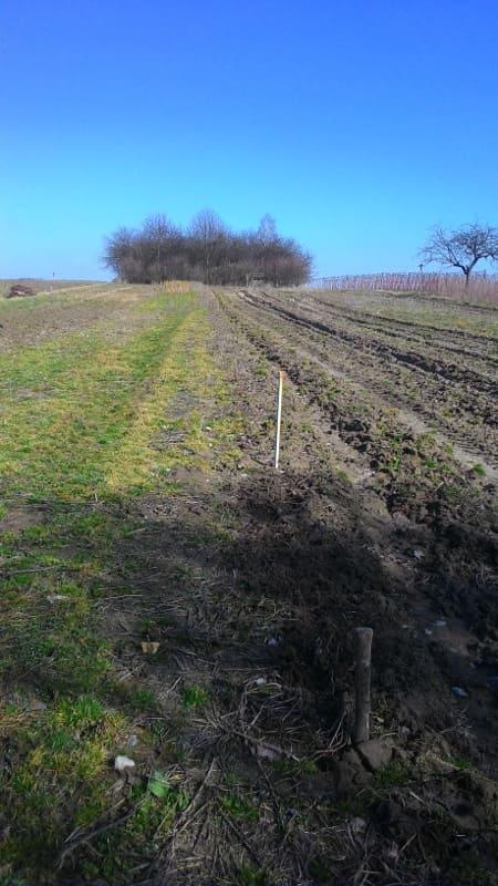 Lehmboden in der Region Lublin - rechts sind Johannesbeersträucher zu sehen.