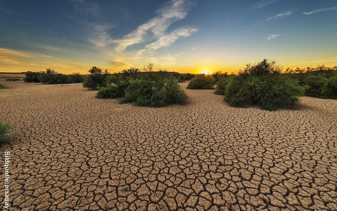 Warum unsere Landwirtschaft reformiert werden muss
