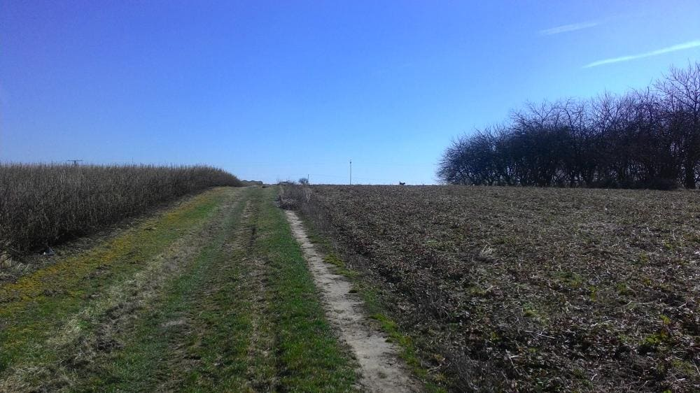 Zulassung von Pflanzenkohle im Biobereich
