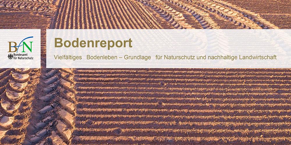 Aktivierung und Purifikation der Pflanzenkohle